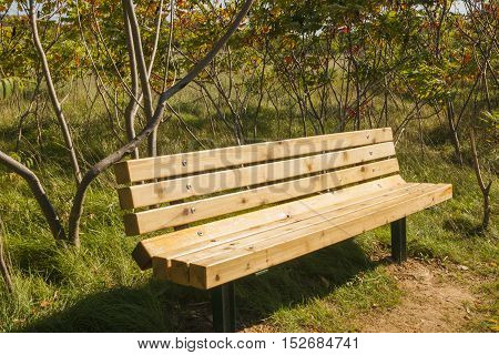 A sunlit wood bench on an early autumn field under low trees