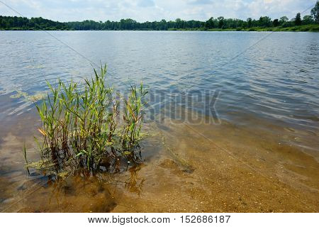 Still Life with aquatic plants in the pond in Bohemia.