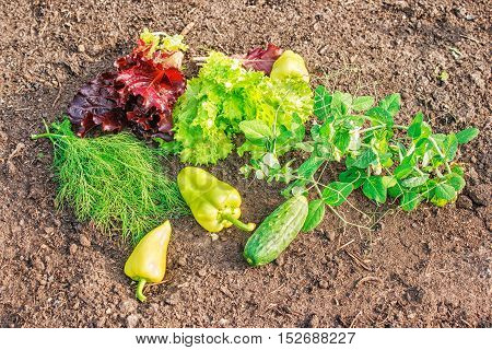pepper green and red lettuce peas parsley dill and cucumber lying on the ground closeup