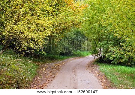 Autumn rural road with yellow and green trees in perspective.