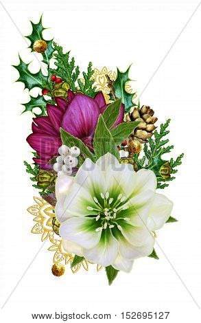 Branch flower hellebore Christmas rose flower Christmas composition burgundy red flower pine cones pine needles gold ornaments snowflakes. Isolated on white background.