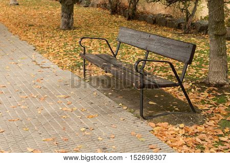 Lone bench on a ride full with yellow fallen leaves in the autumn