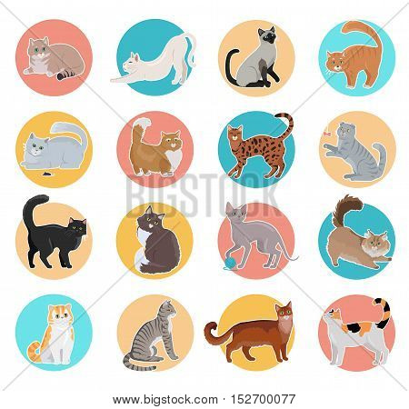 Set of icons with cats. Flat design vector. Colored circles with variety breeds cats in different poses sitting, standing, stretching, playing, lying. For veterinary clinic, pet shop advertising