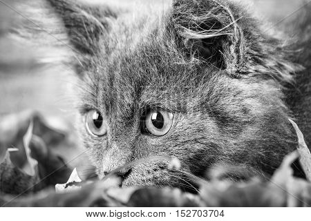Fluffy kitten and yellow autumn leaves. Pets