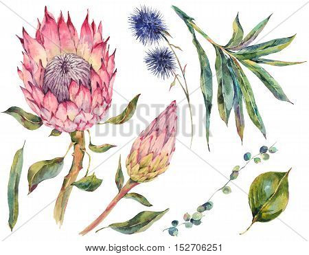 Set of floral vintage watercolor protea, thistles and wildflowers, leaves branches flowers, botanical watercolor illustration isolated on white background