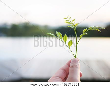 Close-up image of a human's hand holding baby Leaves with blur background