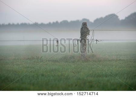 Wooden Pole Of Rural Fence In The Mist. Geesteren. Gelderland. The Netherlands.
