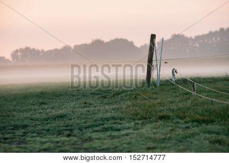 Detail Of Cattle Fence In Foggy Meadow. Geesteren. Gelderland. The Netherlands.