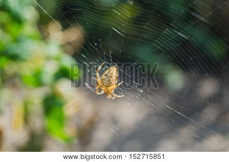 Spider sitting on a cobweb summer day