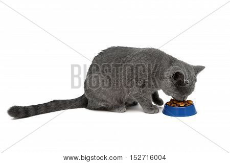 cat eating dry food from a bowl on a white background. horizontal photo.