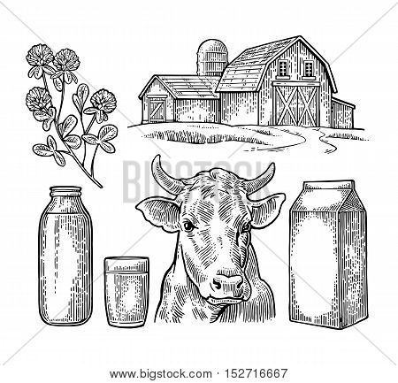 Set Milk farm. Cow head clover box carton package glass and bottle. Vector engraving vintage black illustration. Isolated on white background.