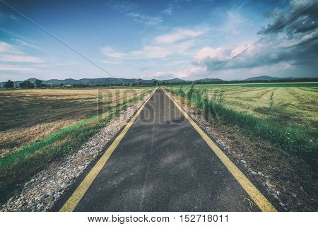 bicycle and pedestrian road in summer field