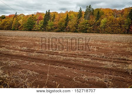 A potato field after harvest in rural Prince Edward Island, Canada.