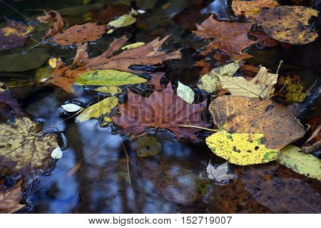 colorful autumn leaves on calm water surface