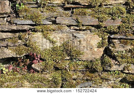 Detailed view of an old stone wall and moss