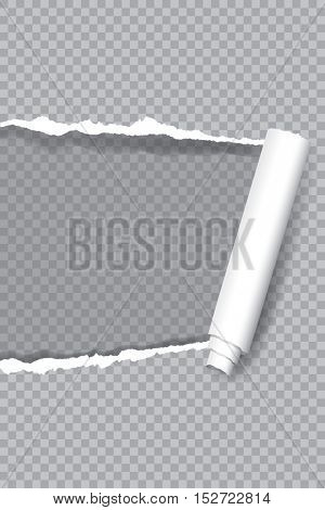 vector transparent ripped paper, layered and editable