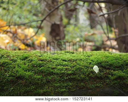 Moss on a tree in autumn forest
