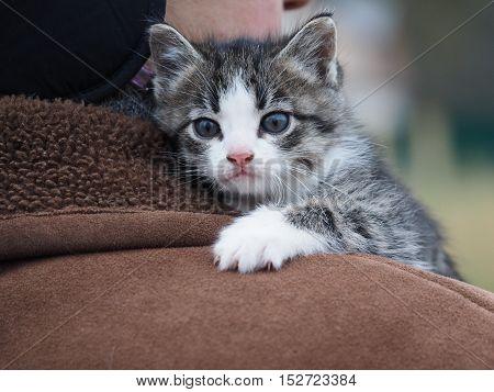 Little funny kitten on man's back. Gray kitten, striped