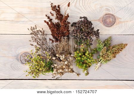 Various dried herbs collected in bunches on a light wood surface. Top view.