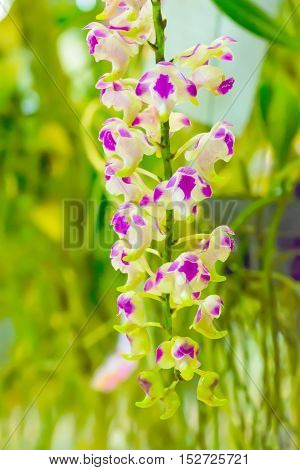 Orchid Is Bright Colors And Beautiful
