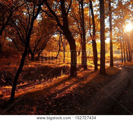 Autumn road. Forest, glare, gold, grass. Sunset, leaf.