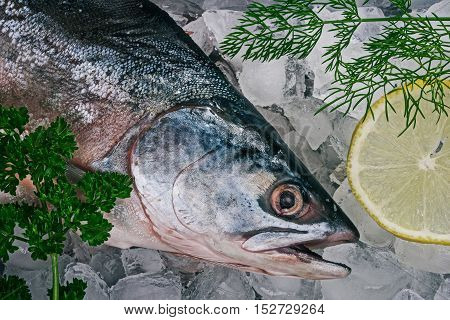 Headshot of fresh whole salmon fish on ice. Flat lay
