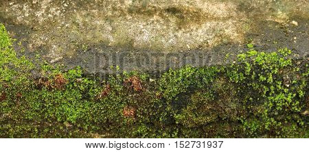 Green Moss On Old Wall Or Moss On The Wall