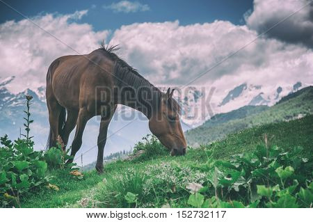 brown horse in high mountains, toned like Instagram filter