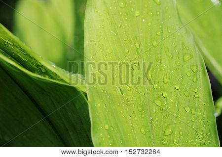 Water Drop On Fresh Leaf With Light