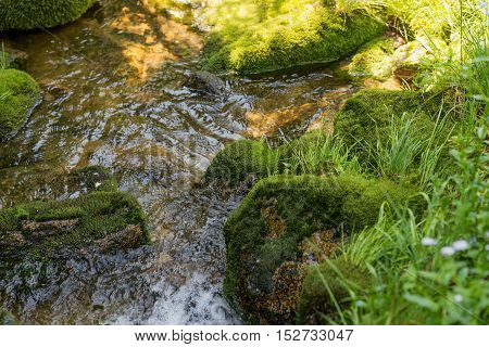 Small stream running through the rocks and vegetation of the rainforest