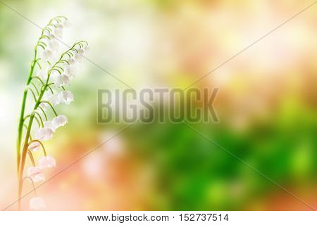 Spring landscape. flowers lily of the valley. Convallaria Majalis