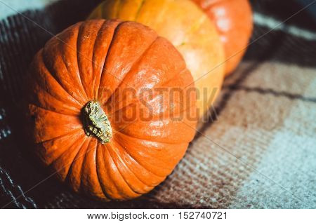 Orange pumpkins group on brown plaid background at home. Autumn object, orange fall symbol, Thanksgiving Day concept. Still life, rustic style. Halloween holiday.