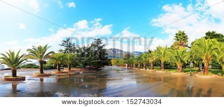 Boardwalk With Palm Trees