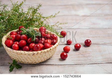 Harvest fresh red cranberries in wicker basket, selective focus, copy space