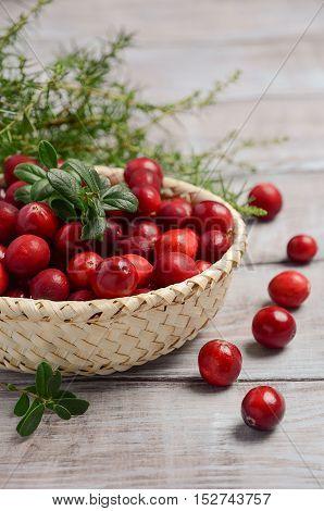 Harvest fresh red cranberries in wicker basket, selective focus