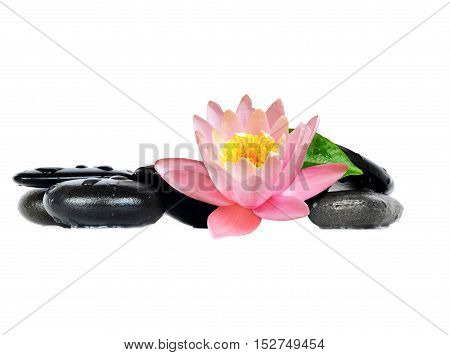 Water drops on black spa stones with Lily flower isolated on white background. Spa concept.