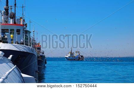 Flock of seagulls follow the fishing vessel in port.