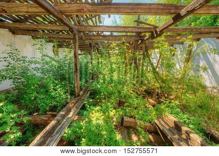 Consequences Of The Nuclear Contamination In Evacuated Rural Area After Chernobyl Disaster. The Overgrown Ruins Of Abandoned House.
