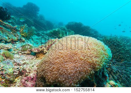 Colorful Ocean Landscape With Yellow Corals In The Maldives
