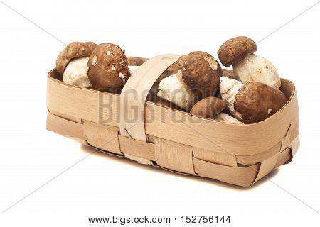 mushroom in basket isolated on white background