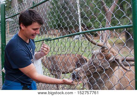Man feeding deer in farm from hand