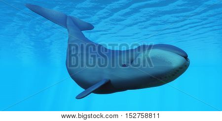 Bowhead Whale 3D Illustration - The Bowhead baleen whale can live to the age of 200 years old and lives in family pods.