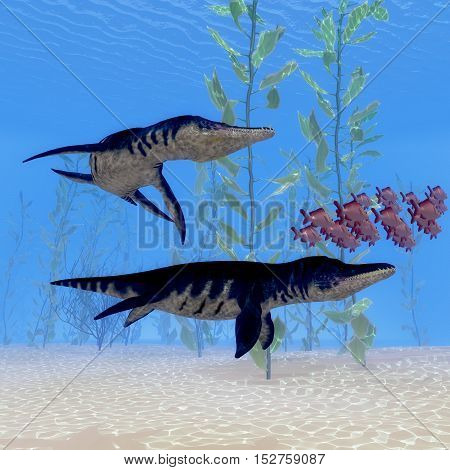 Liopleurodon Marine Reptile 3D Illustration - Two Liopleurodon marine reptiles chase after a school of Red Snapper fish in Jurassic Seas.