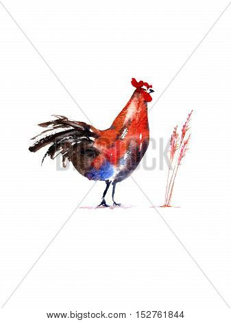 Postcard with rooster and herb.Sketch.Symbol of the new year 2017.Watercolor hand drawn illustration.White background.