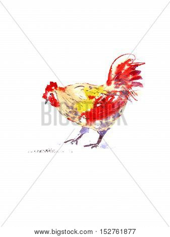 Postcard with rooster and seed.Sketch.Symbol of the new year 2017.Watercolor hand drawn illustration.White background.