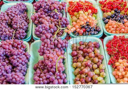 Fresh on the vine grapes, red and black currants, and gooseberries on display at farmers market
