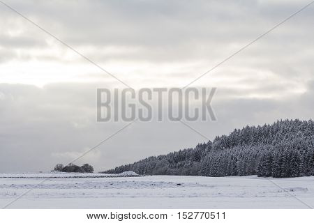 White winter wonderland with snow ice forest in cool nature. The sun kisses this wonderful winter scene in a beautiful snowy and icy landscape. Cloudy sunny sky and snow-covered meadows.