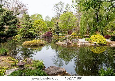 Red Maple Trees around lake in Japanese Garden