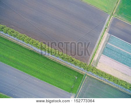 aerial view of green geometric agricultural fields in Netherlands