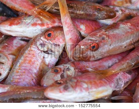 Red mullet fish ready for sale, closeup.